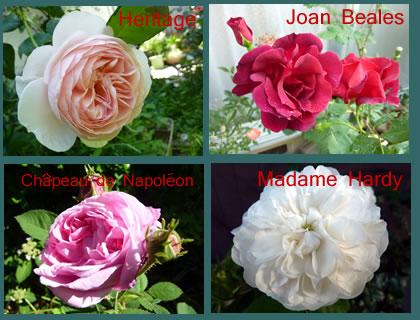 Rose201402_2