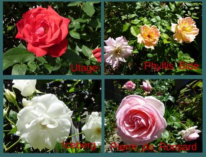 Rose201403_2